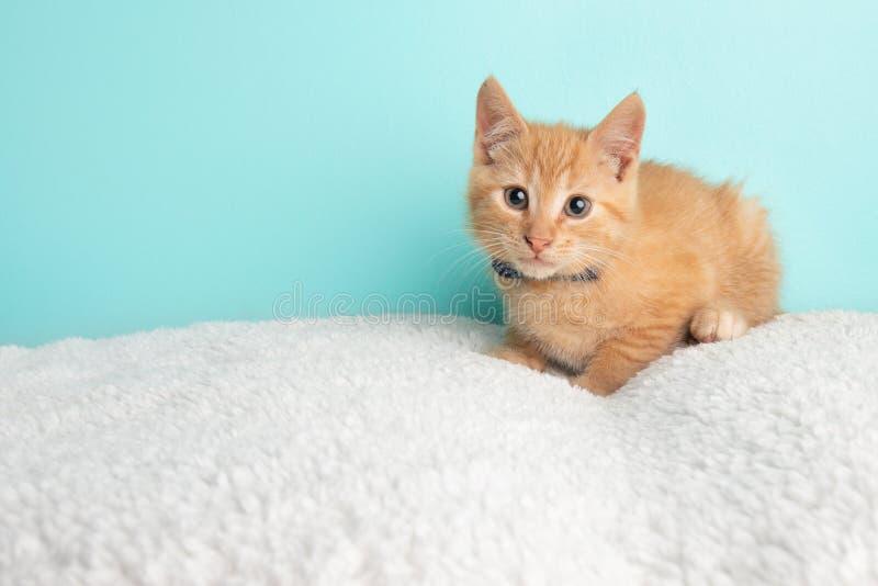 Милое молодое оранжевое спасение котенка кота Tabby нося голубую и белую бабочку поставленную точки Poka лежа вниз со смотреть к  стоковое изображение
