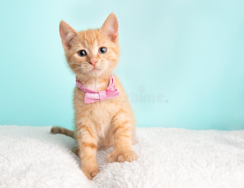 Милое молодое оранжевое спасение котенка кота Tabby нося розовое усаживание бабочки смотря к праву стоковое изображение