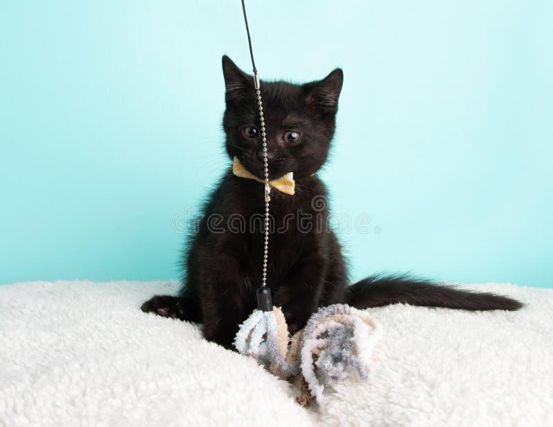 Милое молодое черно-белое спасение котенка кота нося белую и желтую бабочку сидя смешная смотря игрушка строки стоковое изображение