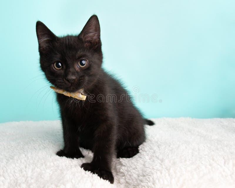 Милое молодое черно-белое спасение котенка кота нося белую и желтую бабочку сидя вверх по близкой стоковая фотография rf