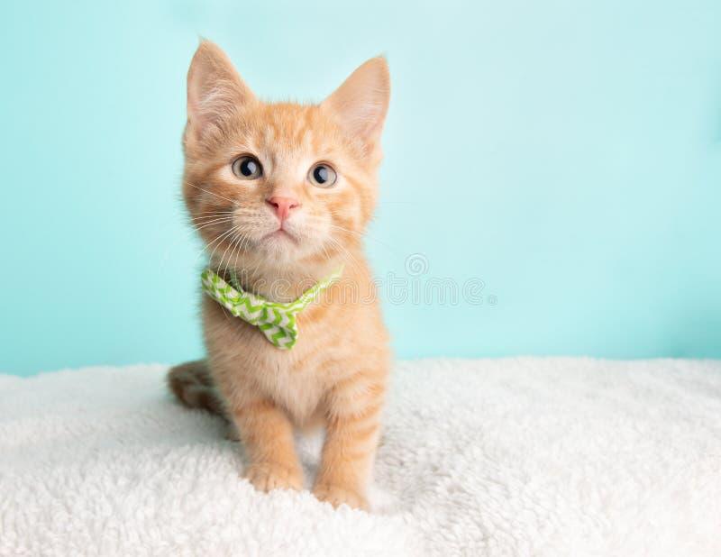 Милое оранжевое спасение котенка кота Tabby нося зеленую и белую Striped бабочку сидя близко к камере смотря к праву стоковое фото
