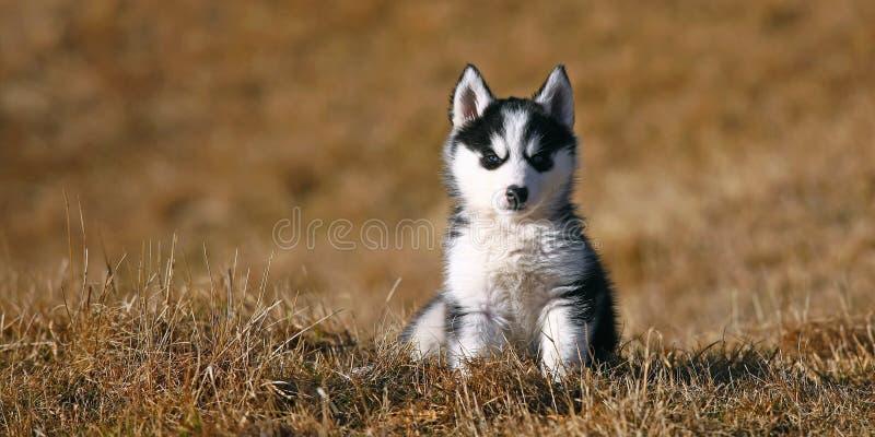 милое усаживание щенка собаки стоковое изображение