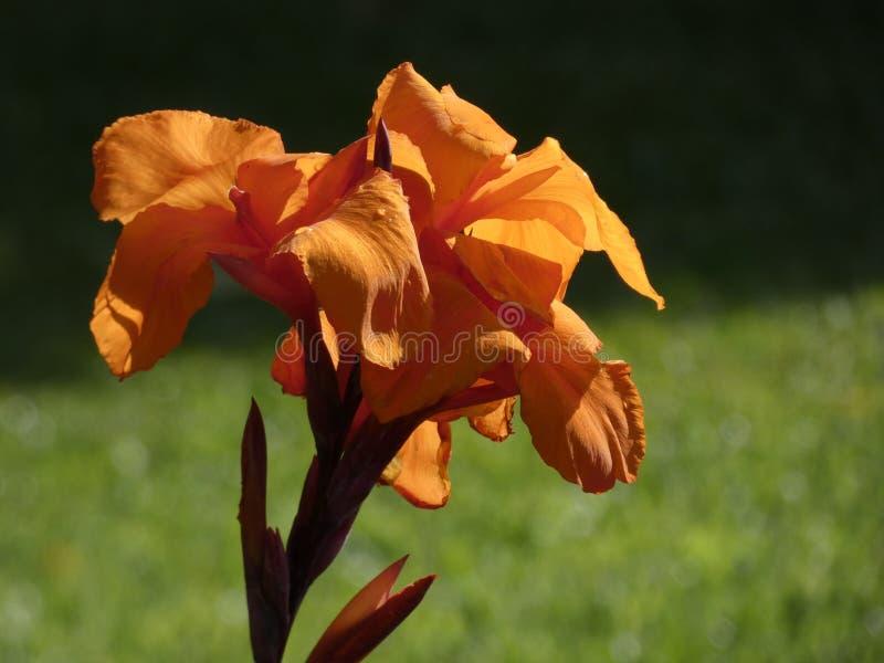 Милые заводы и цветки сада стоковые изображения rf