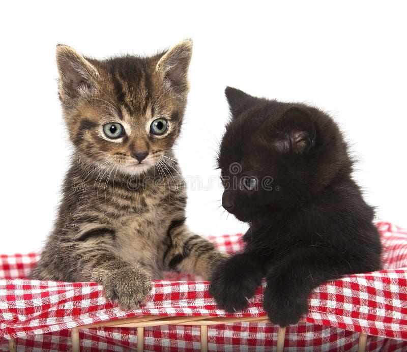 Милые котята черноты и tabby стоковые фотографии rf