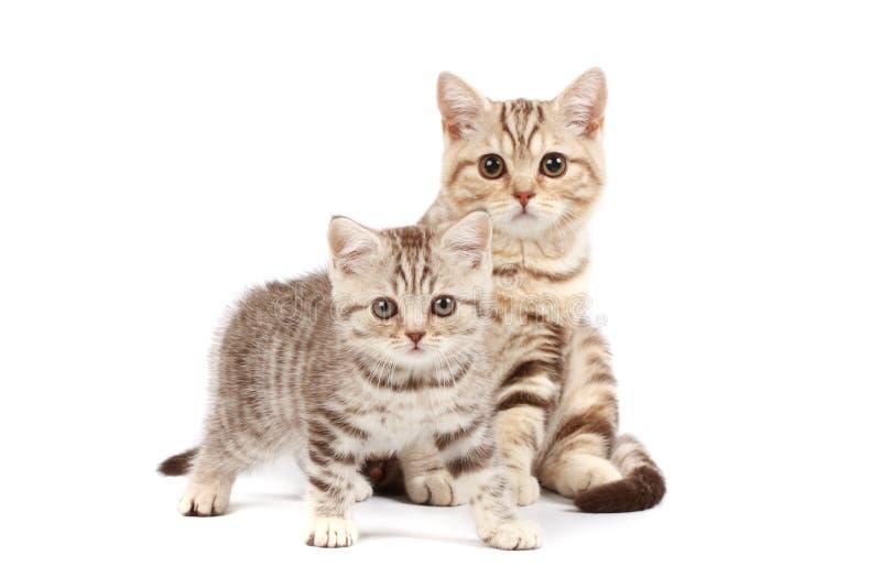 Download милые котята стоковое фото. изображение насчитывающей ангстрома - 6863848