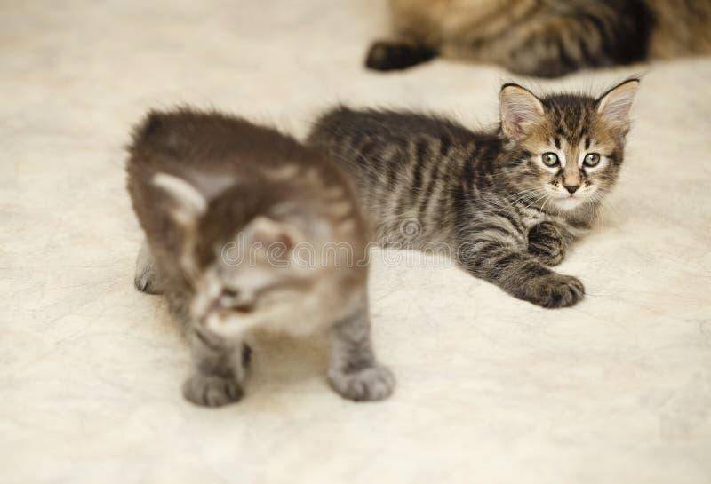 милые котята 2 стоковое изображение