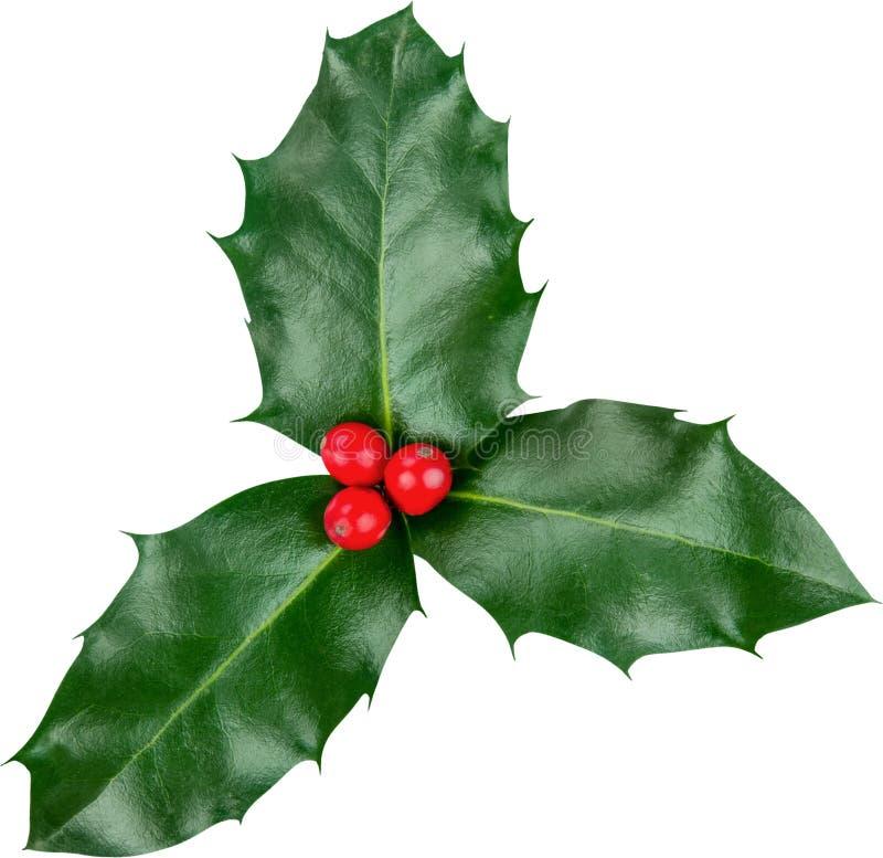 Милые листья падуба и ягоды, рождество стоковое фото