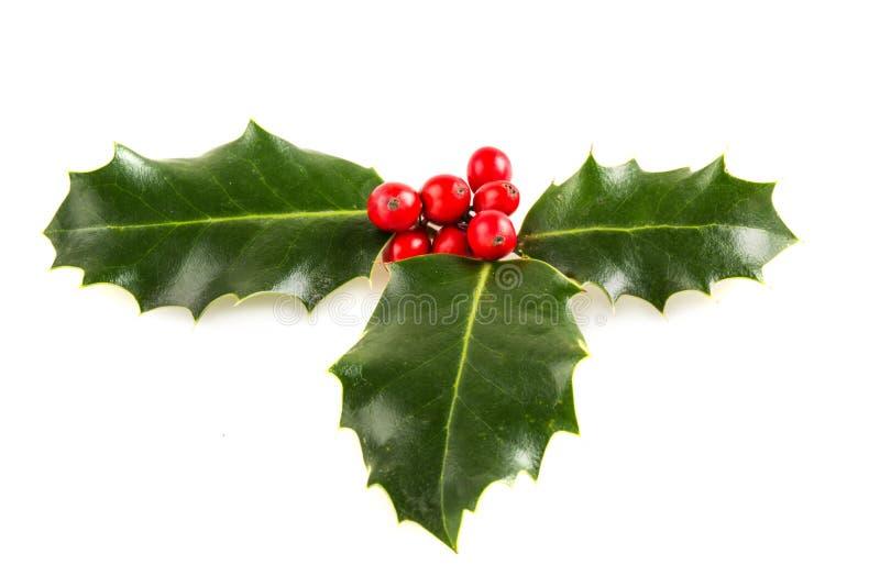 Милые листья падуба и ягоды, рождество стоковое изображение rf