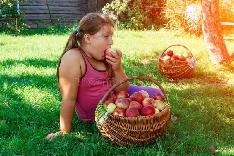 Милые маленькие девочки есть красно- очень вкусное яблоко стоковые фотографии rf