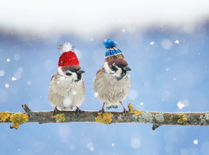 милые маленькие птицы в смешных шляпах knit в зиме сидя o стоковое фото rf