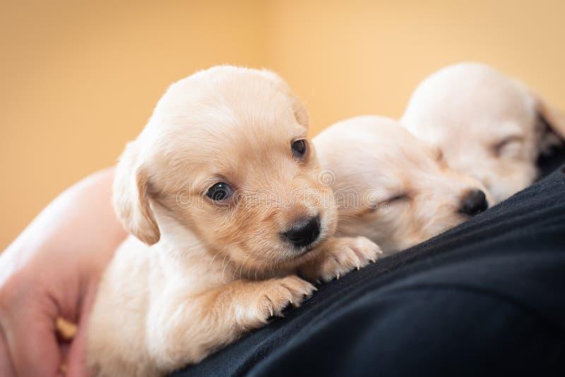 Милые маленькие щенята стоковые фотографии rf