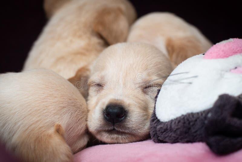Милые маленькие щенята стоковая фотография