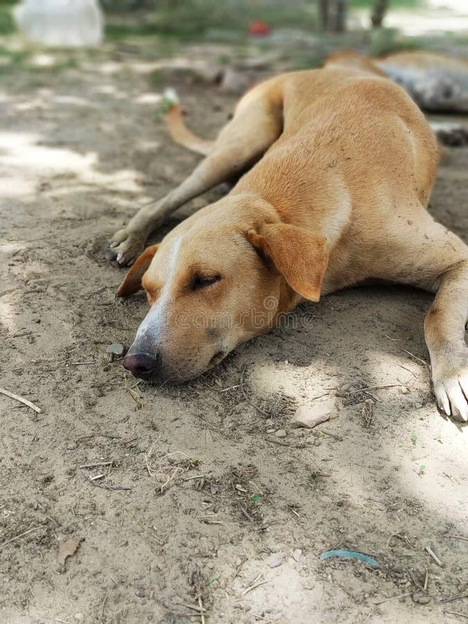 Милые остатки собаки летом стоковое фото