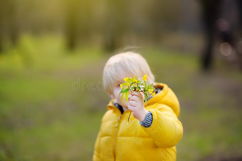Милые полевые цветки выбора мальчика в парке стоковые фотографии rf