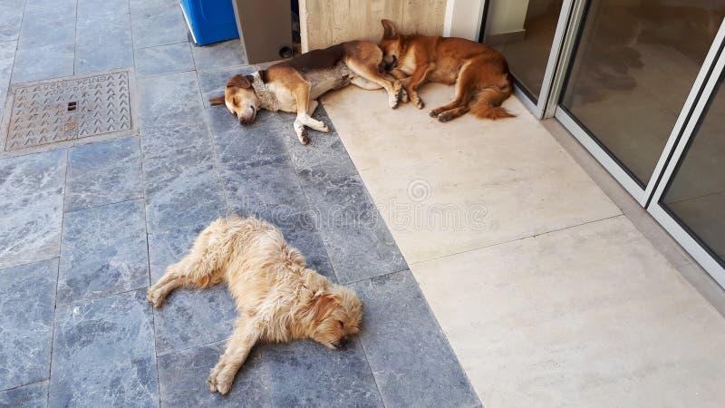 Милые собаки ослабляя на улицах ираклиона, Крита, Греции стоковое изображение