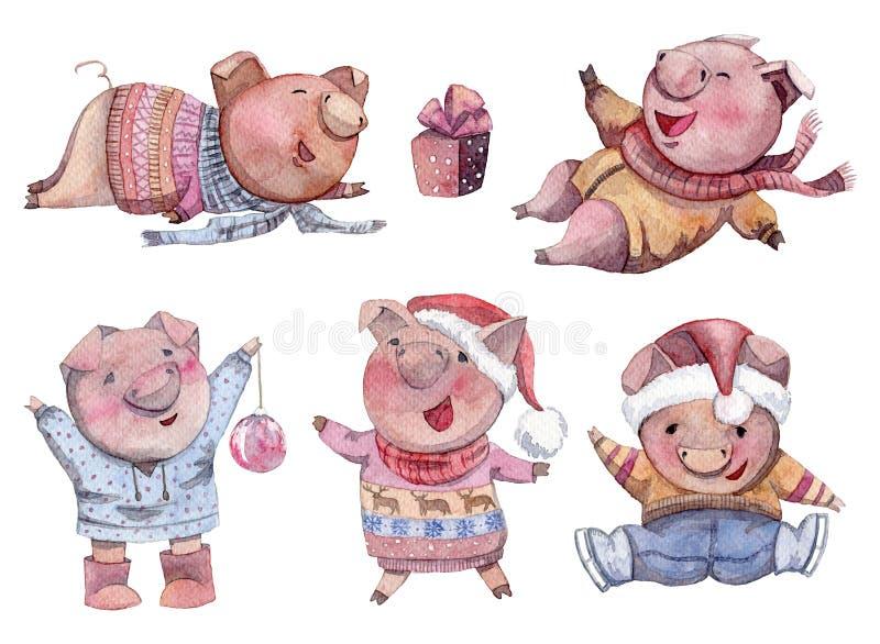 Милые установленные свиньи Смешные характеры поросенка шаржа счастливое Новый Год Китайский символ 2019 год бесплатная иллюстрация