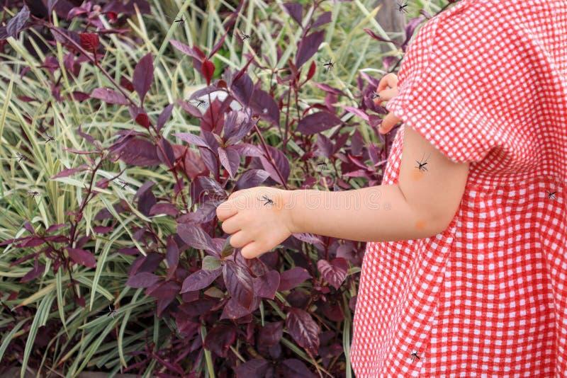 Милый азиатский ребенок имеет сыпь на коже и аллергию от комариного укуса стоковое фото rf