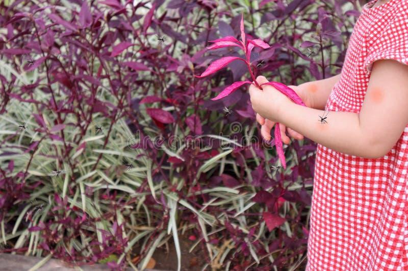 Милый азиатский ребенок имеет сыпь на коже и аллергию от комариного укуса стоковые фото