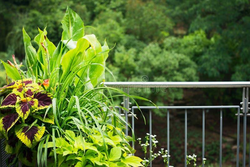 Милый бак плантатора балкона с ornamental выходит заводы стоковые фотографии rf