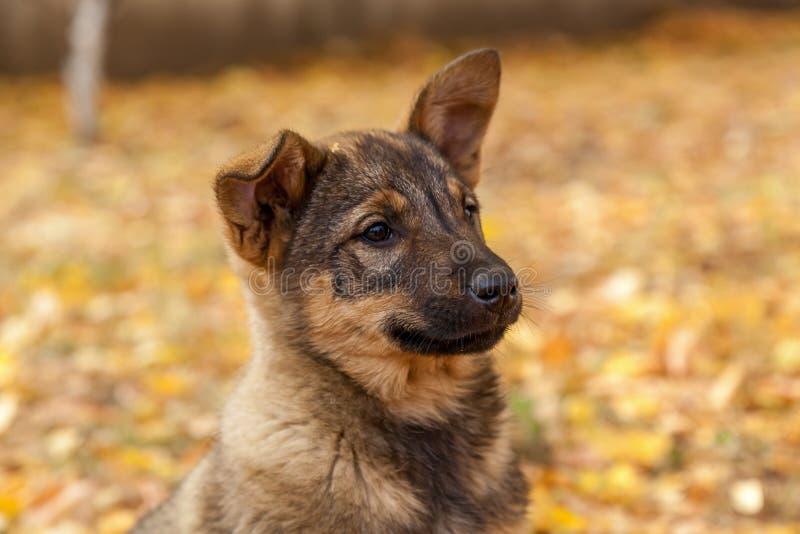 Милый бездомный щенок стоковое изображение