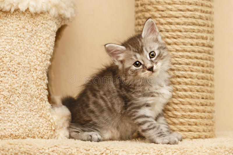 милый котенок немногая стоковая фотография