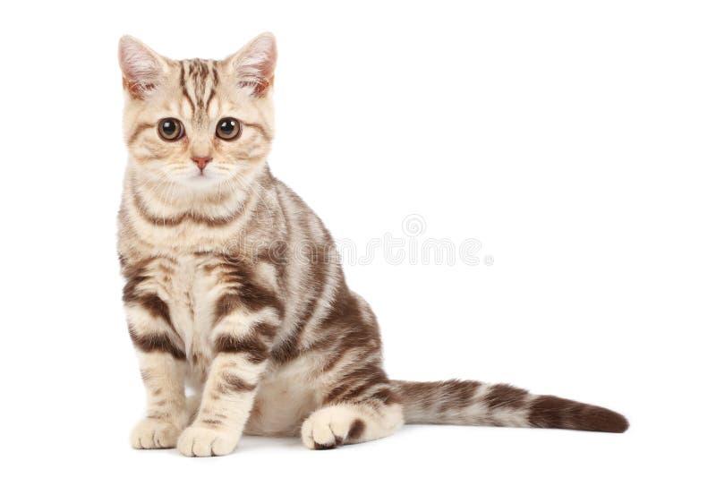 Download милый котенок стоковое фото. изображение насчитывающей шерсть - 6863638