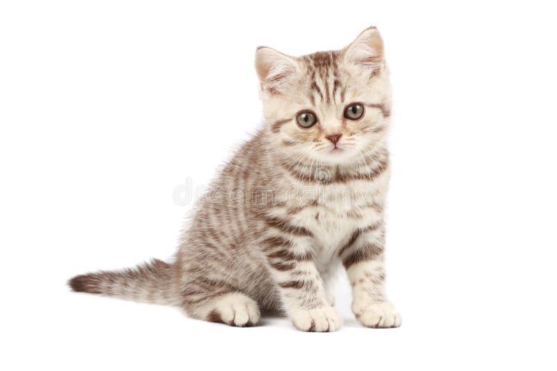 Download милый котенок стоковое изображение. изображение насчитывающей довольно - 6863897