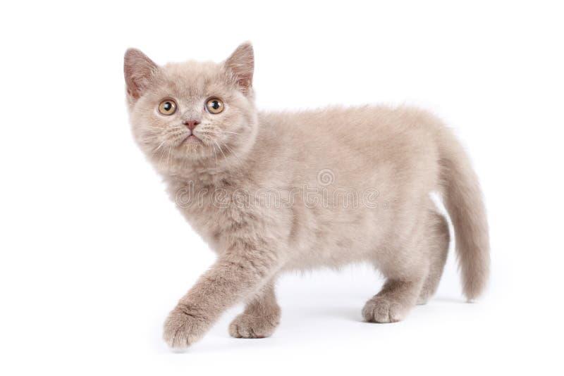 Download милый котенок стоковое изображение. изображение насчитывающей глаза - 6863901