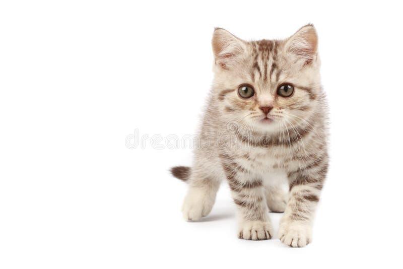 Download милый котенок стоковое изображение. изображение насчитывающей изолировано - 6864027