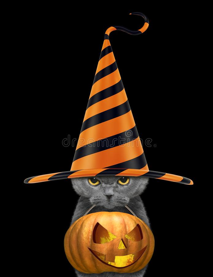 Милый кот в смешной тыкве хеллоуина владением шляпы в рте - изолированном на черноте стоковые изображения rf