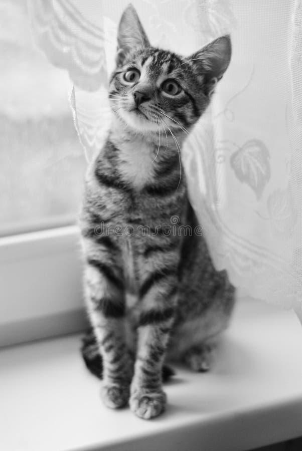 Милый кот играя дома стоковые изображения rf