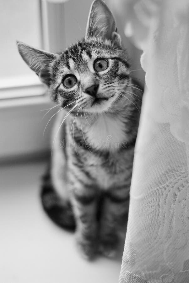 Милый кот играя дома стоковые изображения