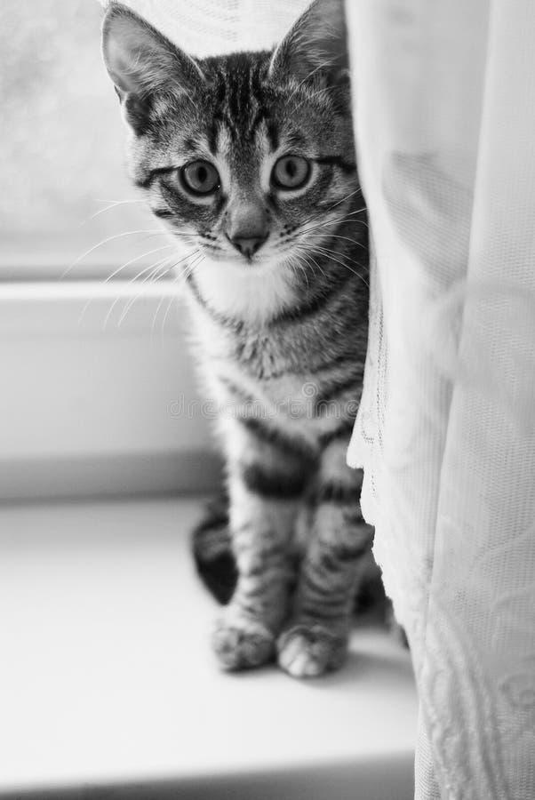 Милый кот играя дома стоковая фотография