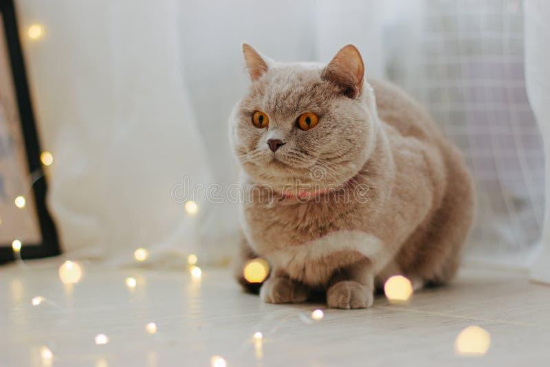 Милый кот и запачканные света рождества стоковая фотография