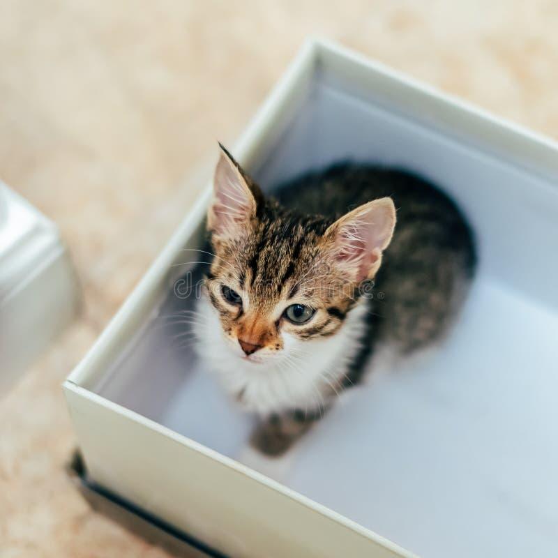 Милый кот младенца в маленькой коробке стоковая фотография rf