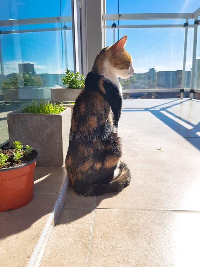 Милый кот на балконе наблюдая снаружи Кот наслаждаясь взглядами зданий стоковое изображение