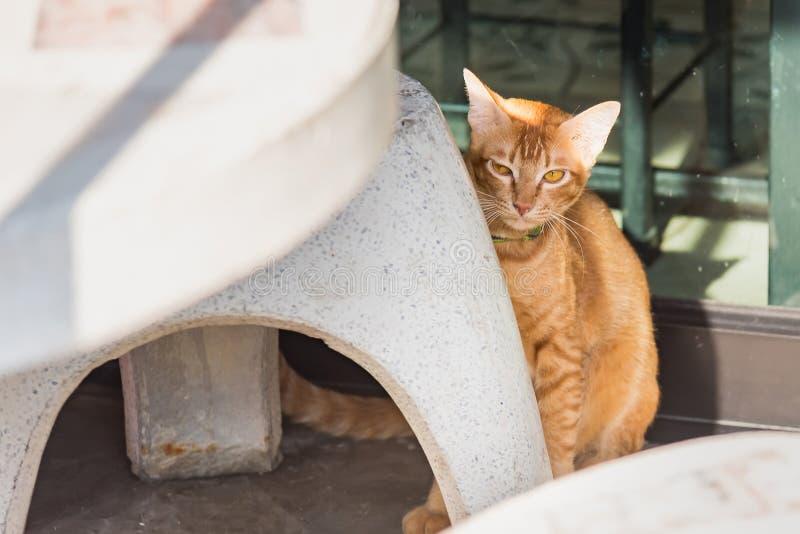 Милый кот на улице r стоковая фотография rf