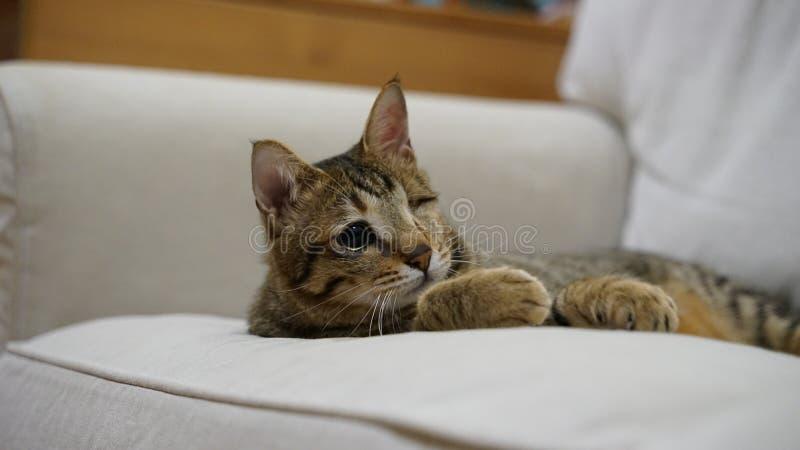 Милый кот подмигивая глазу стоковое изображение