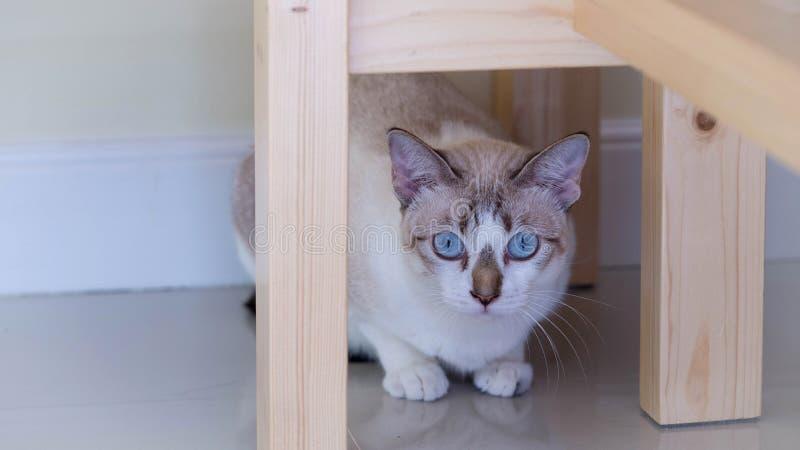 Милый кот под стулом Кот посмотрел вне двери стоковые изображения rf