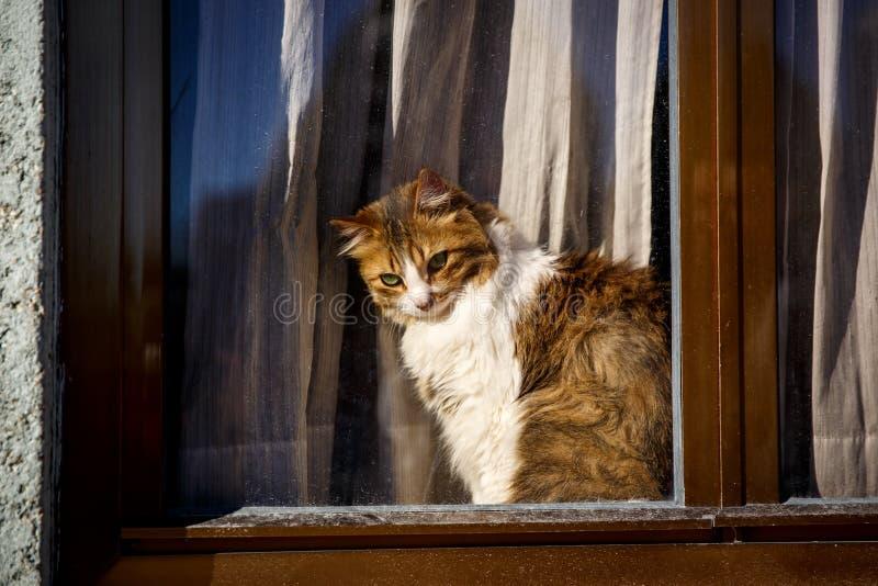 Милый кот сидя на окне за стеклом и наблюдая внешний, на открытом воздухе взгляд стоковое изображение
