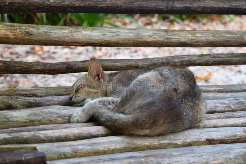 Милый кот спать мирно на деревянной скамье - холодной релаксации - ворсина силы стоковые изображения
