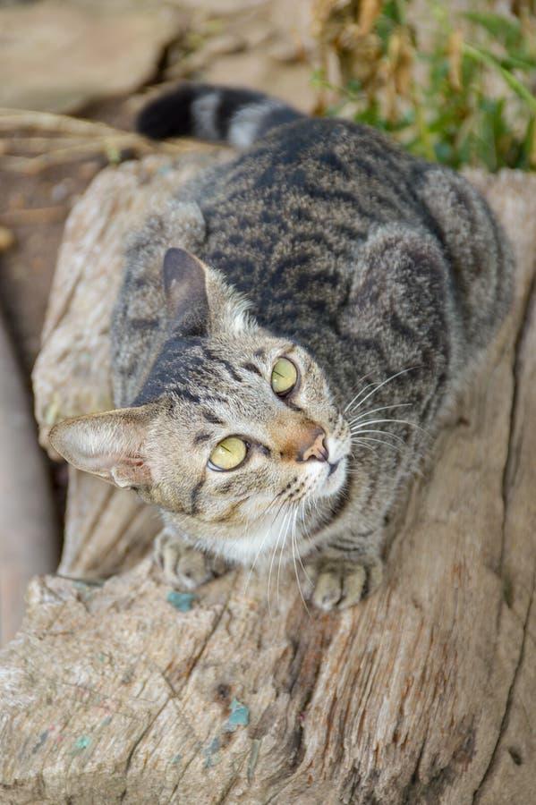 Милый кот tabby на деревянном журнале стоковые фотографии rf