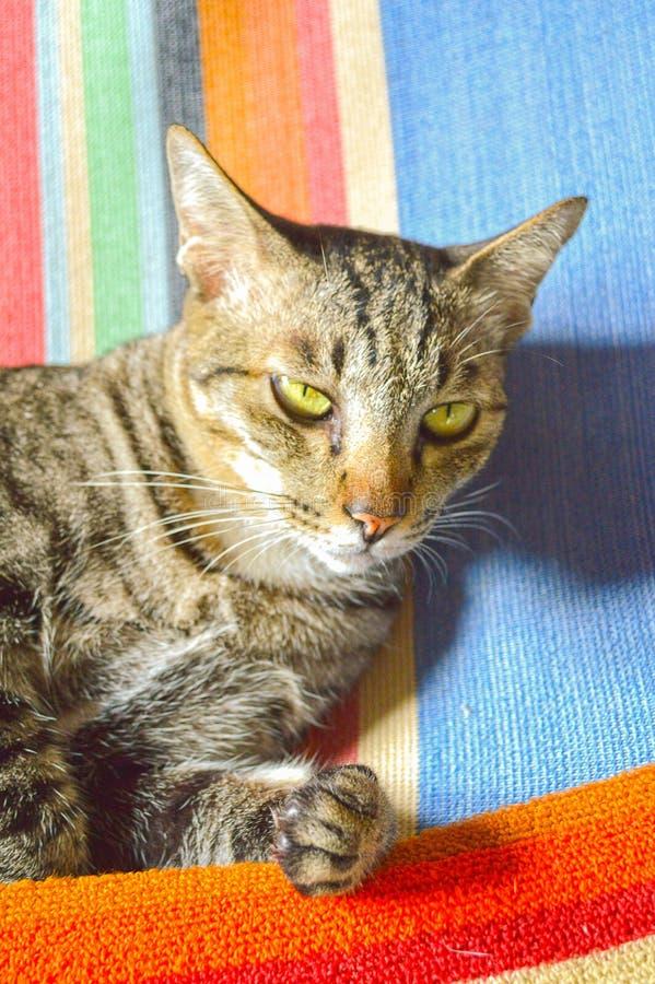 Милый кот tabby на ткани стоковые фотографии rf