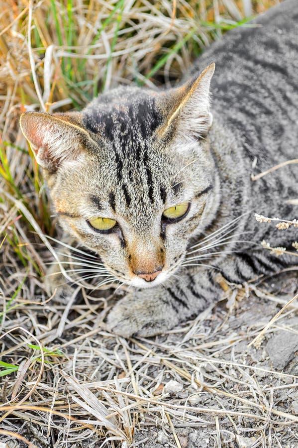 Милый кот tabby на том основании стоковые фото