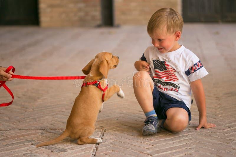 Милый красивый щенок redhead с мальчиком стоковое изображение rf