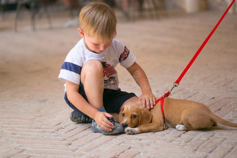 Милый красивый щенок redhead с мальчиком стоковая фотография rf