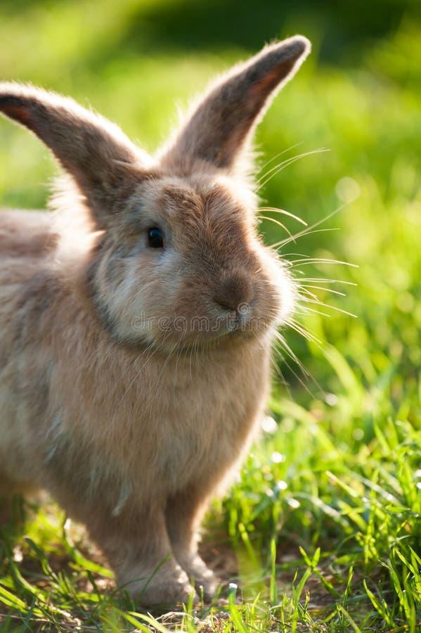 Милый кролик в луге стоковое фото