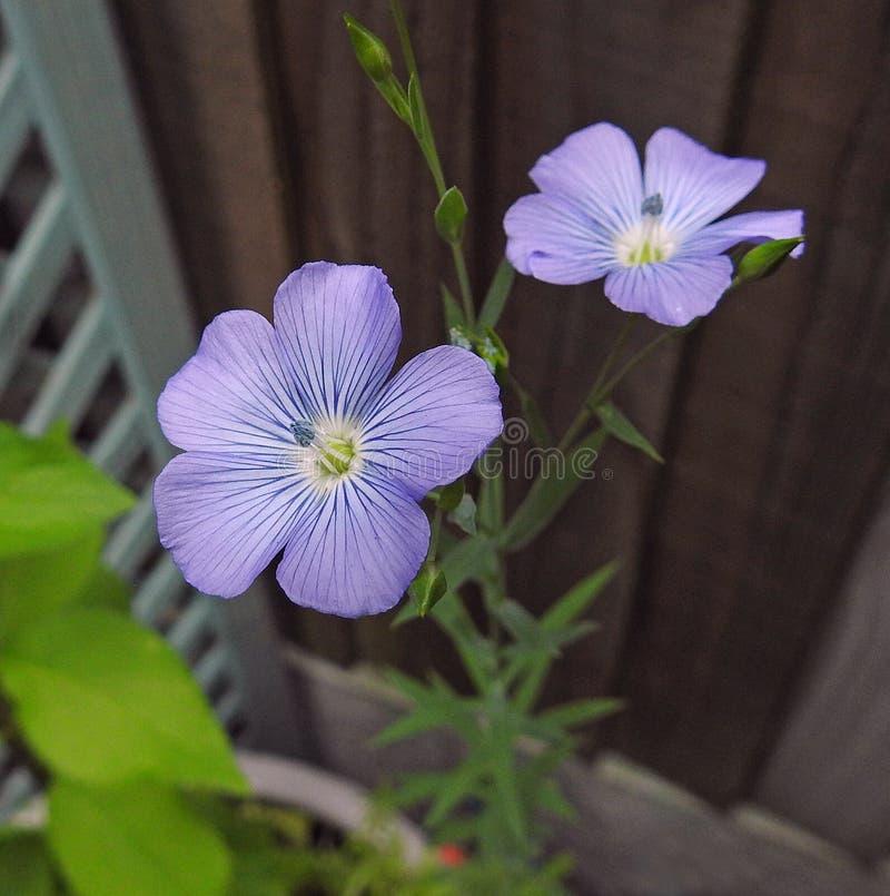 Милый луг цветет заводы растя в патио ушата контейнера бака сада малой страны стоковые изображения
