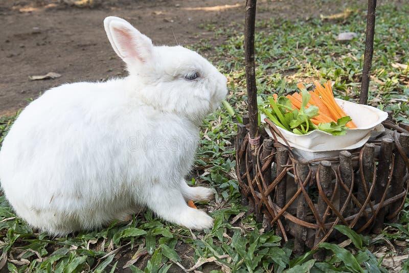 Милый маленький белый кролик зайчика стоковые фотографии rf