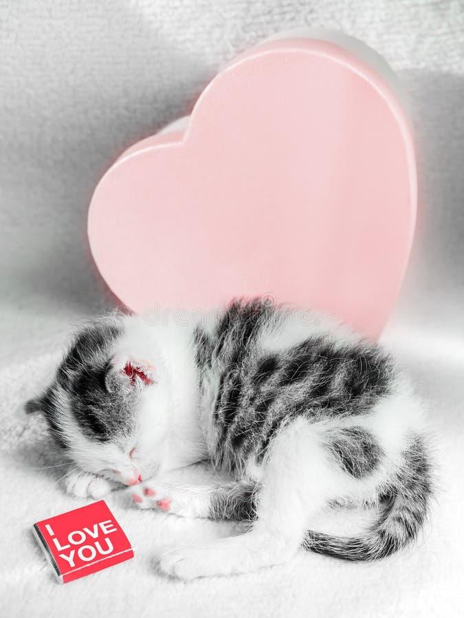 Милый маленький котенок спит на белом ковре на солнце около коробки сердца помадок с шоколадом Милый конец-вверх киски спать стоковое фото